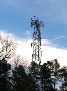 Vultures on a cell tower.
